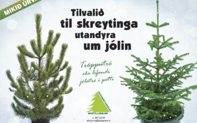 Jólaskógur 2019
